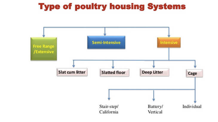 Global Poultry Industry: A Market Analysis   Pixelsutra