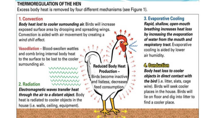 Global Poultry Industry: A Market Analysis | Pixelsutra